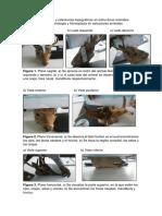 Referencias topográficas en estructuras animales