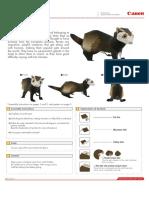 CNT-0009905-01.pdf