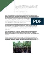 DISKON..!082-220-228-118, harga bibit durian montong, bibit durian musang king purworejo