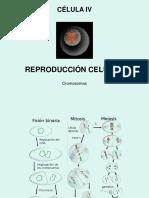 Reproducción Celular