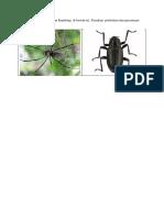 gambar kumbang