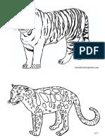 tigre.docx