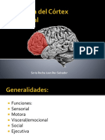 Cortex Prefrontal