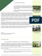script-tmp-inta-_el_desbrote_de_los_viedos_en_produccin_boletin_.pdf