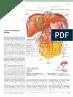 Celiac Artery Netter