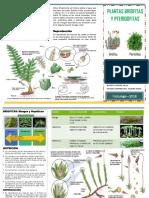 Triptico Tipos de Plantas