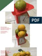 25 WA +62 852.6872.6777, Jual Bibit Jeruk Keprok Gerga Bengkulu.pdf