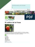 El Cultivo de Fresa