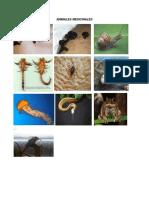 ANIMALES MEDICINALES.docx