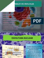 La envoltura nuclear en la célula