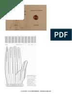 dermoriflessologia-riequilibrio-emozioni-organi (1).pdf