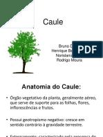 caule-seminrio-150516200700-lva1-app6892