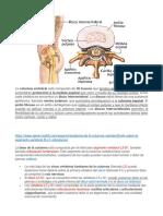 Todo sobre el segmento vertebral L5-S1 (articulación lumbosacra).docx