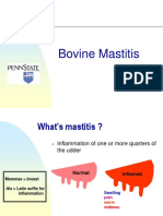 Bovine Mastitis