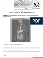 Ficha 6 Sistema Digestivo.