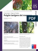 Ficha 05 Pulgon Lanigero Del Manzano