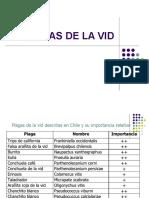 plaga_vid.pdf