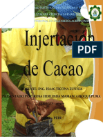 Injertacion de Cacao