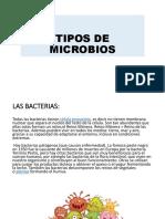 Tipos de Microbios