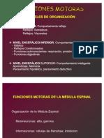funciones-motoras-fisiologia2863