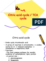 2.Citric Acid Cycle k 21