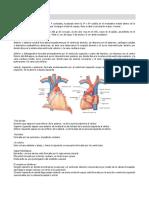 corazón (torax).docx