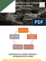 Fisiopatologia Del Eritrocito