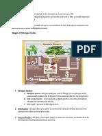 Nitrogen Cycle Summary