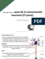 Tema 7. Bases de la comunicación neuronal 1.pdf