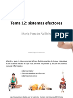 Tema 12. Sistemas efectores.pdf