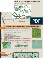 Cyanophytas