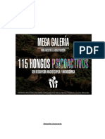 HONGOS PSICOACTIVOS
