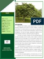 Manual de Reforestacion Vol3