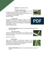 Ordenes de Insectos Exposición 1