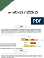 INTRONES Y EXONES