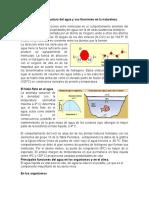 La Relación de La Estructura Del Agua y Sus Funciones en La Naturaleza