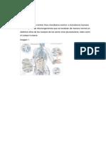 Paper Microbiologia