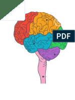 Estudo sobre o cerebro.doc
