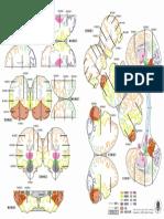 Atlas CHICO cerebro color Modelo B4.pdf