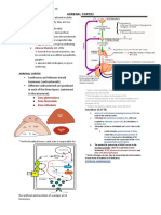 1 Adrenal Cortex