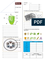 lembarkerjasiswastrukturdanfungsitubuhtumbuhan-170421014137.pdf