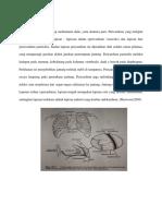 Anatomi Jantung New