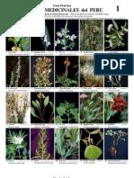 123 Medicinal Plants-Peru