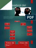 Área cerebral del lenguaje.pptx