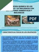Diapositivas de Los Crustaceos