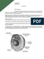 celula-1-guia-aprendizaje-5to-basico.docx