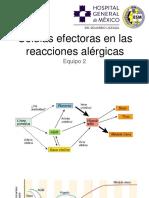 celulas efectoras.pptx