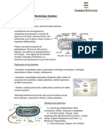 Micrbiologia Bacterias