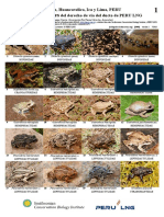 1009_anfibios_y_reptiles_del_ducto_de_peru.pdf