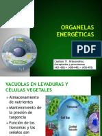 Organelas energéticas